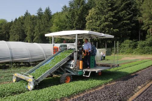 RR Dr. Markus Dieth auf der Salatschneidemaschine