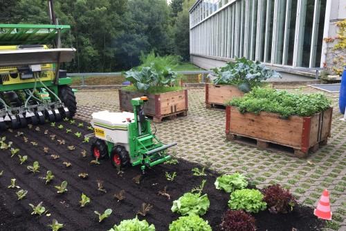 Salate in verschiedenen Wachstumsstadien wurden angepflanzt.
