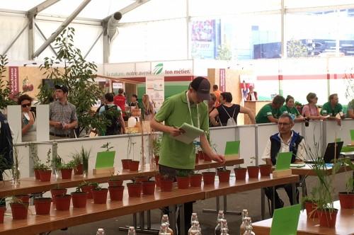 David Hauri beim Bestimmen von Pflanzen